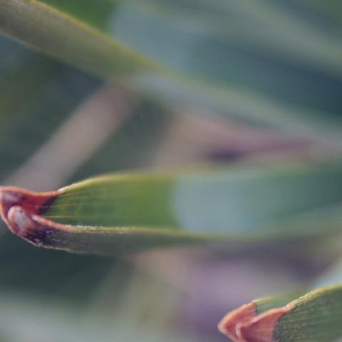 sting leaf summer nature