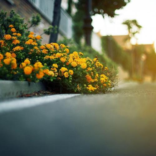 Street Flowers Yellow wallpaper
