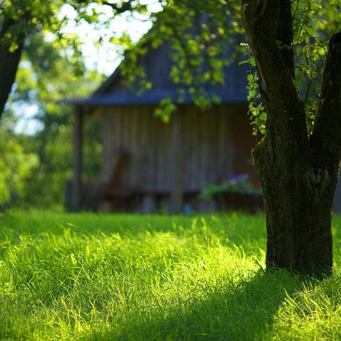 ダウンロード 夏の庭の緑の草 高品質の壁紙