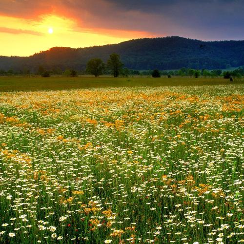 Summer glow on flower field wallpaper