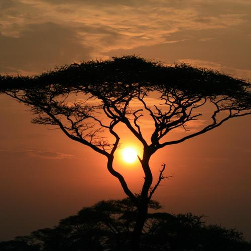 Sun through the tree in sunset wallpaper