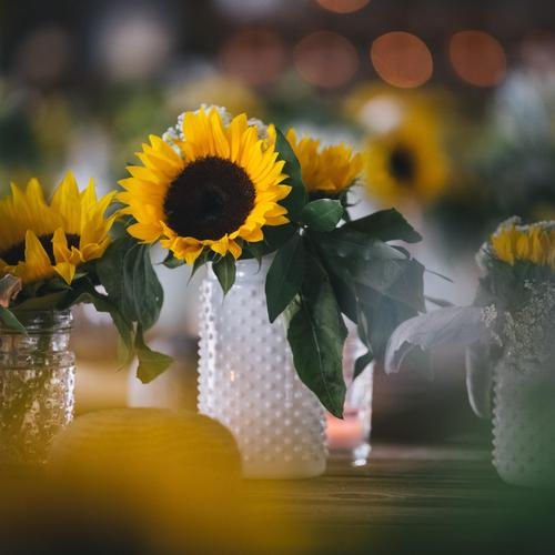 Sunflowers in vase in macro shot wallpaper