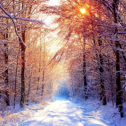 Sunlight over the snow tree wallpaper