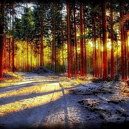 Sunlight over the woods wallpaper
