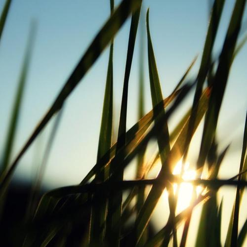 Sunlight through grass wallpaper