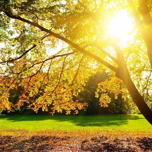 Download Sunlight through the tree High quality wallpaper