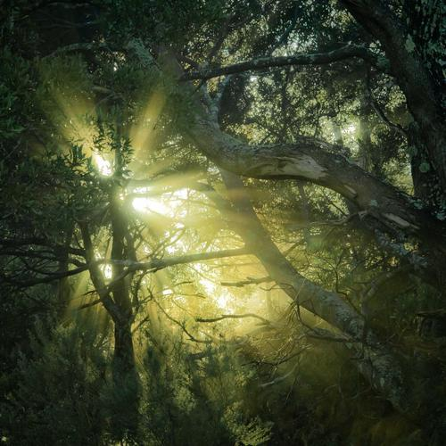 Sunlight Through The Treetops