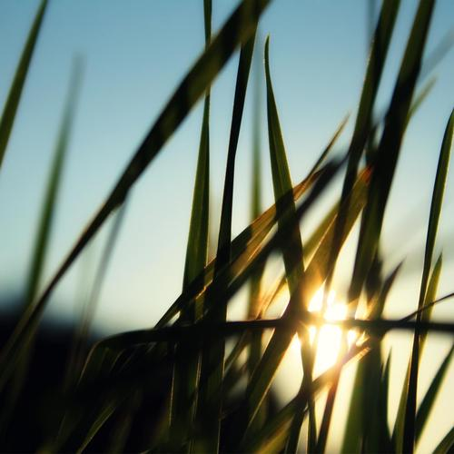 Sunrise Through The Grass wallpaper