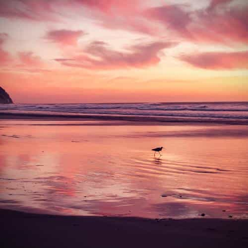 sunset beach bird red orange nature sea vignette