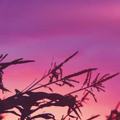 sunset field forest grass flower beautiful pink