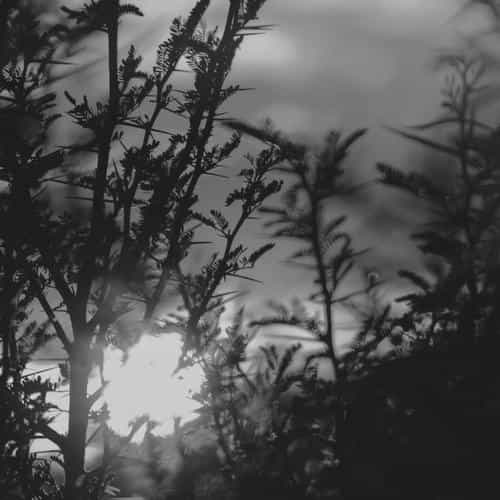 sunset tree light flare bokeh nature photo dark bw