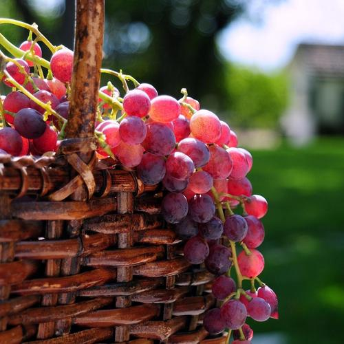 Sweet grapes wallpaper