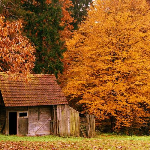 The cabin in the autumn woods wallpaper