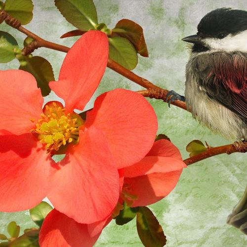 The Perfect Bird with red flower wallpaper