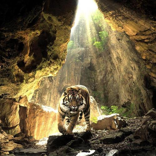 Tiger in cave wallpaper