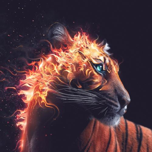 Tiger with fire hair wallpaper