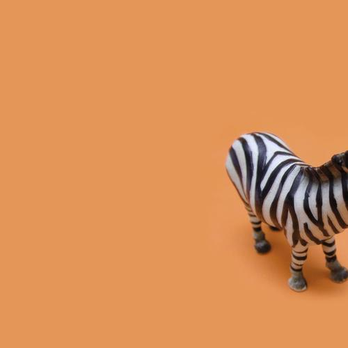 Tiny zebra tapet