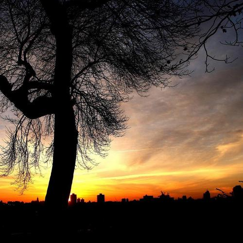 Tree at sunset with city Silhouette