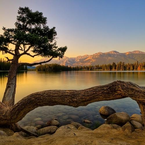 Tree beside the peaceful lake wallpaper
