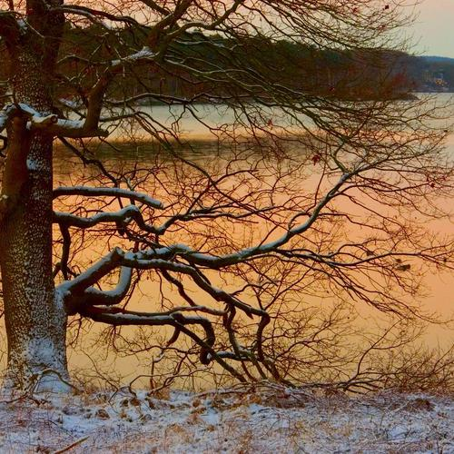 Tree on the lake in winter