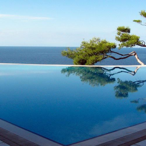 Tree reflection on the pool wallpaper