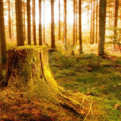 Tree stump in a magical forest wallpaper