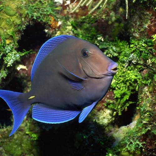 Poisson tropical underwater fonds d