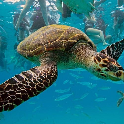 Turtle travelling underwater