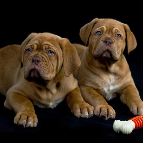 Two dogs with sad faces