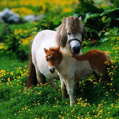 Two small horses wallpaper