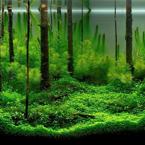 Underwater forest wallpaper