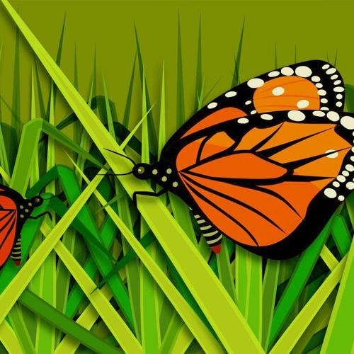Vector Butterfly On Grass