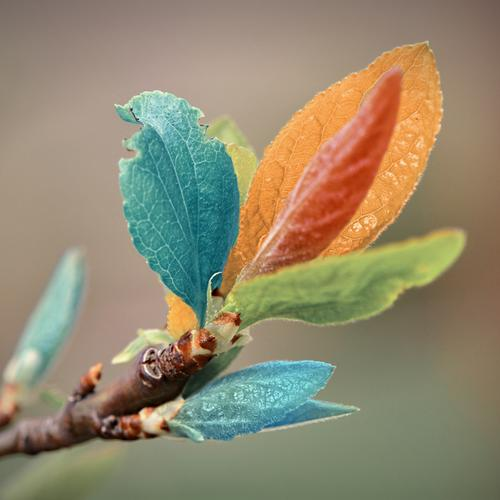 Vintage colorful leaves wallpaper