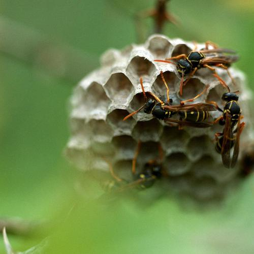 Wasp nest wallpaper