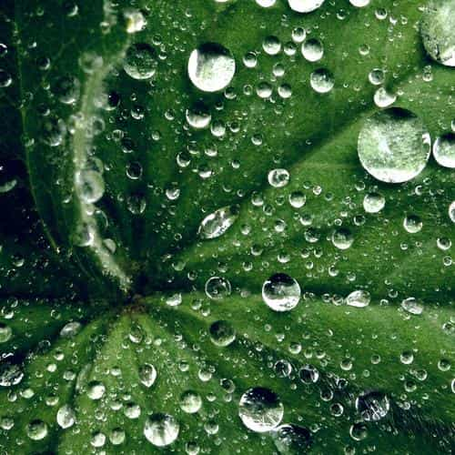 water drop on leaf summer green live