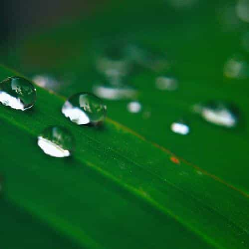 water drops nature leaf after rain forest