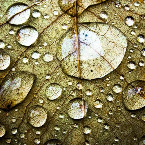 Waterdrops on leaf wallpaper