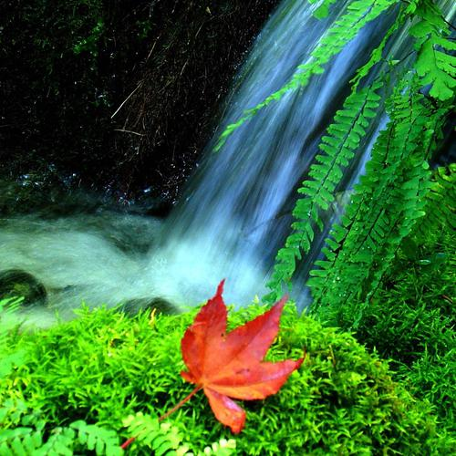 Waterfall and maple leaf
