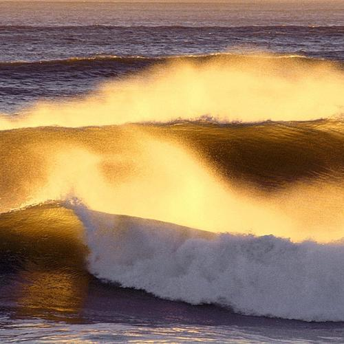 Wave Of Gold Dust