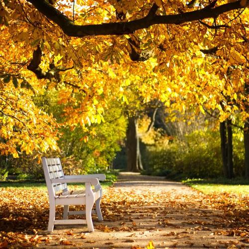 White bench in the Sunny Autumn Day wallpaper