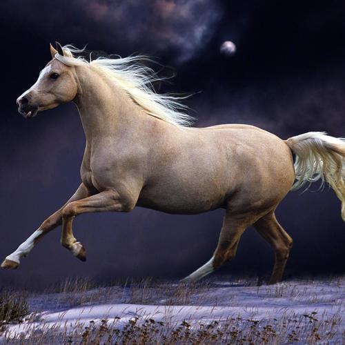 Download White horse running High quality wallpaper