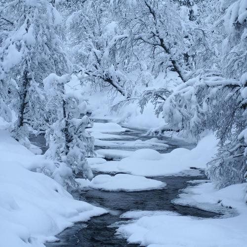Winter river snow trees