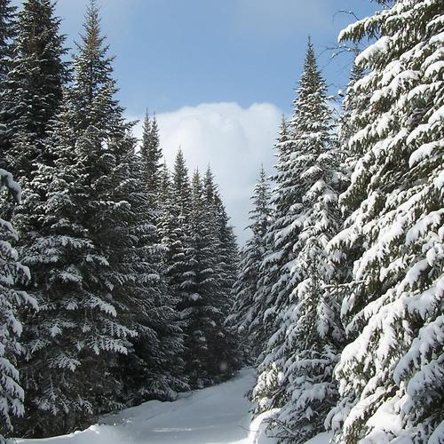 Winter ski trail wallpaper