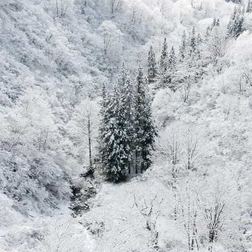 winter white snow wood forest mountain