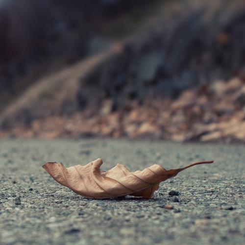 Wither leaf on the road wallpaper