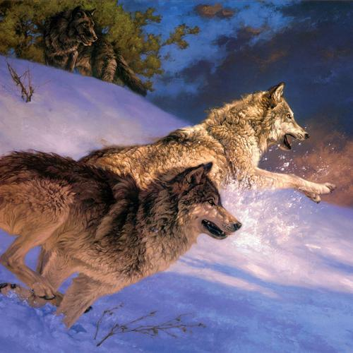 Wolves In Winter running on snow