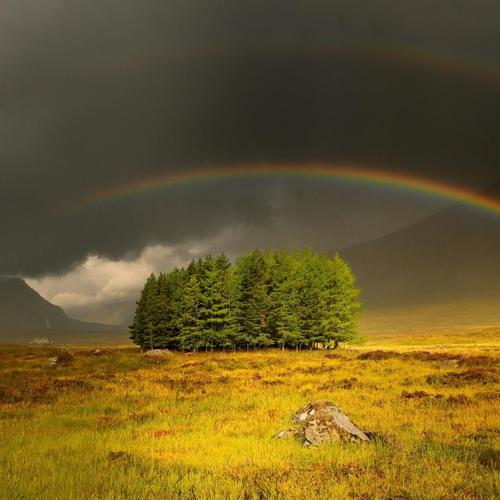 Wonderful Rainbow Over An Isl Of Trees