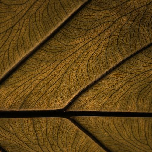 Wood and leaf surface wallpaper