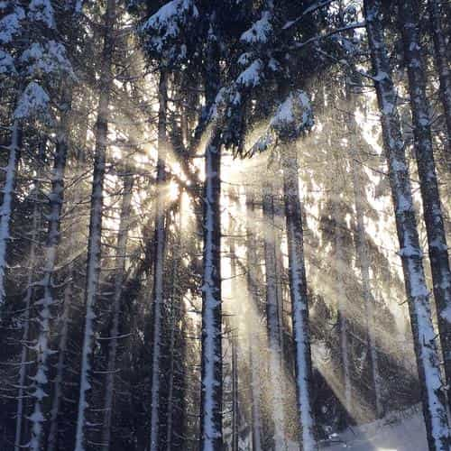 wood snow winter light sun nature