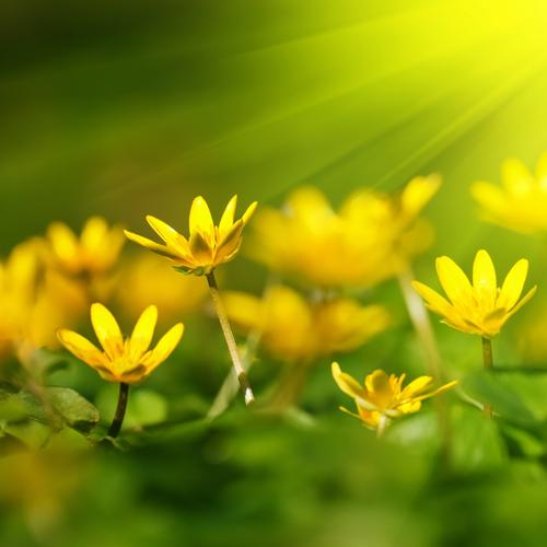 Yellow flower in sunshine wallpaper